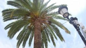 palmeras utrera